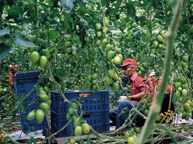 tomaateters02.pdf